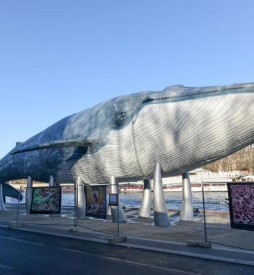 Blue Whale Project &#8211; COP21<br/><span>10/2015</span>